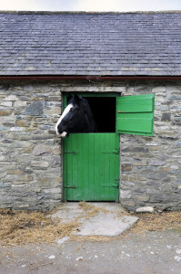 irish Stable